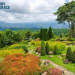 Wilderness to Garden image