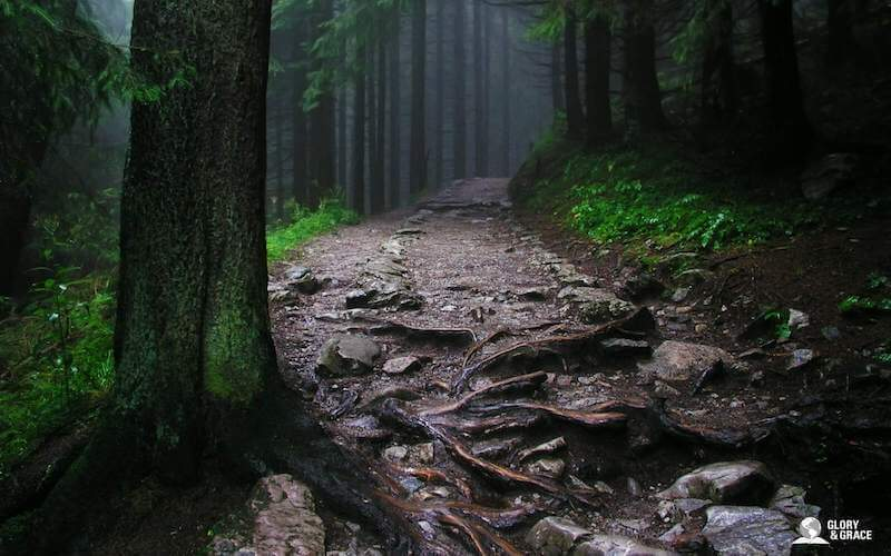 The mystery of God image showing a dark forest