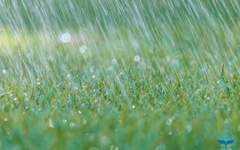So shall my Word be images showing rain falling on grass