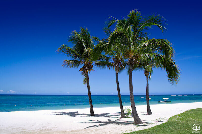 Planted by the River showing palm trees by the beach