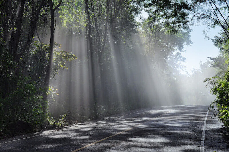 Results of faith showing a forest with light rays