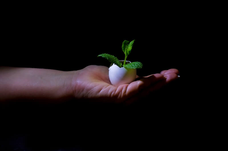 The child grew showing a hand holding a young plant
