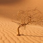 withered and dry tree
