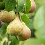 first fruits bearing fruit