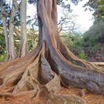 They have no root in themselves showing a tree with roots