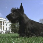 A PRESIDENT'S PAL: 'Barney,' 2000-2013: America's 'First Dog' During George W. Bush White House Years