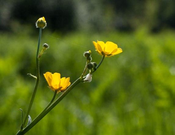 camping-fleur-jaune-soleil2
