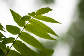 feuilles-darbre-boucherville