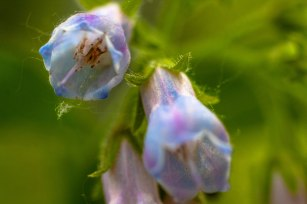 fleurs-clochettes