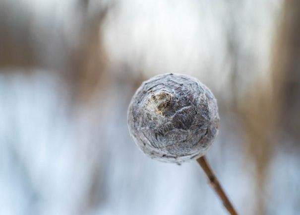 ponpon-hiver