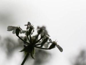 silhouette-fleur-boucherville