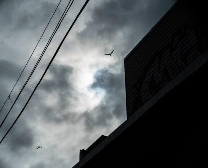 oiseaux dans le ciel (1 sur 1)