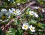 coléoptères fleur7 (1 sur 1)