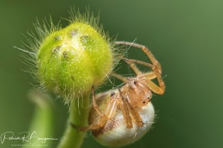 araignée (1 sur 1)