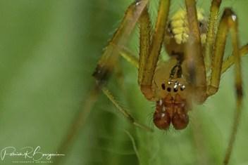 araignée m (1 sur 1)