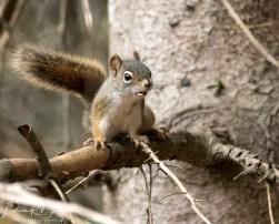 écureuil graine (1 sur 1)