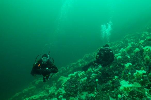 plongeuses