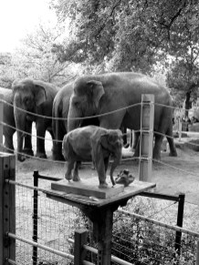 Zoo of Antwerp ©1999