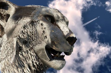 3D project cheetah ©2015