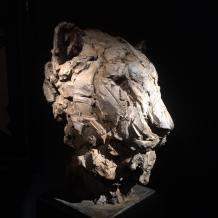 Lioness 63x50cm 1/8 ©2016