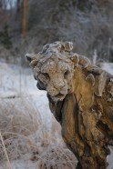 Cheetah in winter 107x93cm 1/8 © 2006