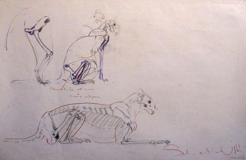 Anatomy study 110x90cm charcoal on paper ©2004