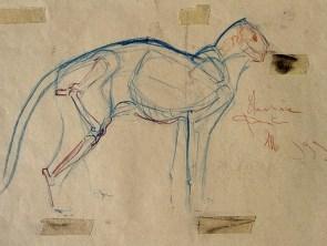 Anatomy study 44x65cm charcoal on paper ©1999