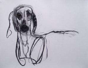 Dog 65x45cm charcoal on paper ©2013