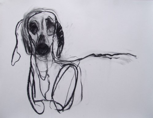 Dog 65x45cm charcoal on paper ©2013