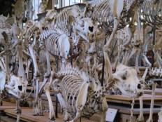 Musée d'Histoire Naturelle Paris