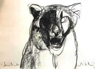 Cheetah 100x70cm charcoal on paper ©Villas 2019