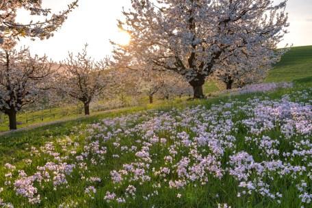 Warmes Abendlicht. Die Bäume und Blummen blühen um die Wette