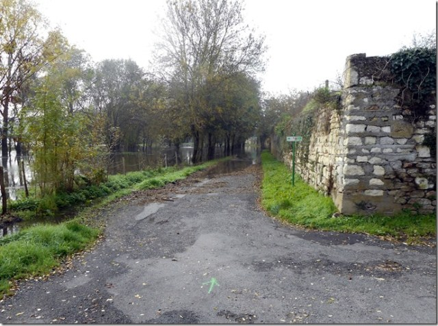 Le Thouet ou la Loire en crue à Artannes-sur-Thouet (49) 1