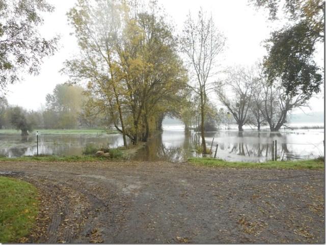 Le Thouet ou la Loire en crue à Artannes-sur-Thouet (49) 2