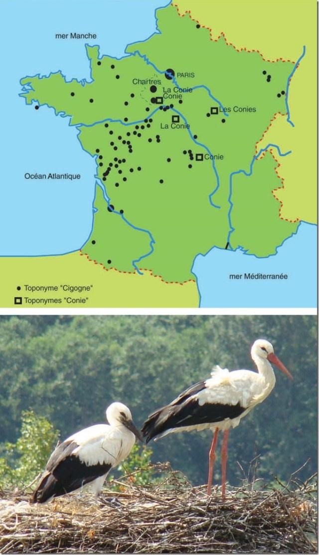 Les toponymes Conie et Cigogne