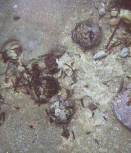 Proyectiles de cañón adheridos al fondo marino de la Guadalupe, fragata hundida frente a Les Rotes en 1799, muy parecidos al hallado ahora en Les Albaranes.