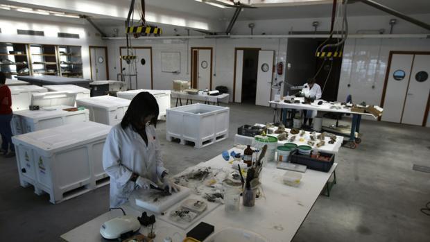 La UCA inaugura el I máster oficial en Arqueología Náutica y Subacuática