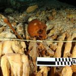 Presentan en Vancouver, el Proyecto Arqueológico Subacuático Hoyo Negro