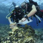 Underwater Survey On South Coast Of Greek Island Of Naxos Completed