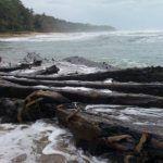 Emerge casco de barco hundido hace más de 50 años en el Caribe costarricense