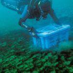 INAH crea primer archivo subacuático