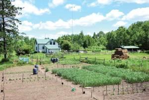 homesteading for Survivalist Plan