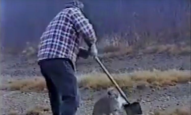 bobbercat