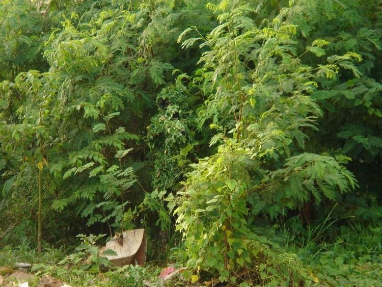 sniperforest