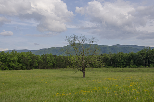 Springtime Landscape at Cades Cove by Nancy J Olds