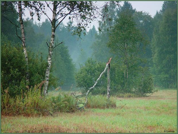 Зламана береза. Ілюстрація:www.photosight.ru
