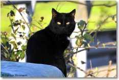gatto 2
