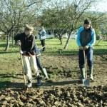 kopanje1