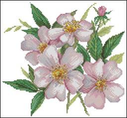 Gráfico de punto de cruz para descargar GRATIS en PDF, imprimir y bordar rosas silvestres