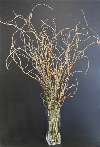 Curly Willow Branches